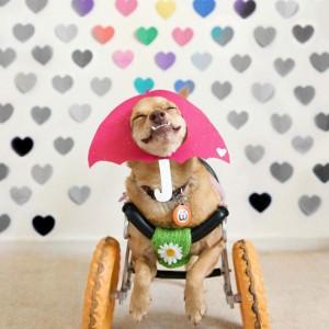 pas sa invaliditetom petface11