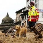 ČOVEKOV NAJBOLJI PRIJATELJ: Pas Riplej spasio 17 ljudi ispod ruševina u Nepalu!