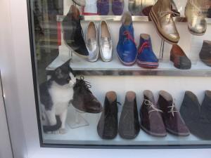 BEOGRAD: Mačak Marko, maskota prodavnice obuće, MORA u siguran dom! POMOZIMO MU!