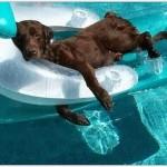 PODELITE: 6 saveta kako da rashladite psa na +30!