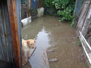 poplave u hrvatskoj petface2