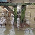 POMOZIMO IM: Sklonište za pse poootpuno potopljeno! (FOTO)