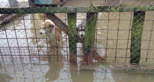 poplave u hrvatskoj petface
