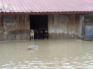 poplave u hrvatskoj petface4