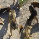 STRAVA U KRUŠEVCU: Psi na ivici smrti, umiru od gladi na putu! POMOZITE!