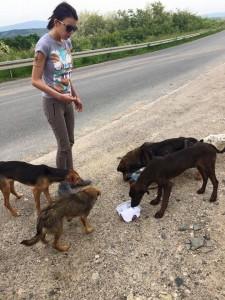 """ORPAK u akciji spašavanja izgladnelih pasa: """"Ovo je HOROR""""!"""