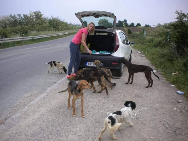 psi u krusevcu petface