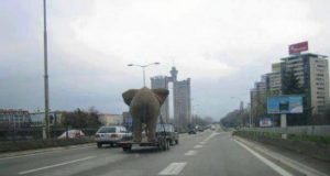 slon u beogradu petface