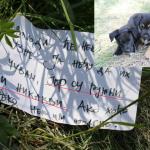 """ZAJEČAR: Hitno potrebna pomoć za pse koje je vasnik ostavio jer su """"ružni i nikakvi""""!"""