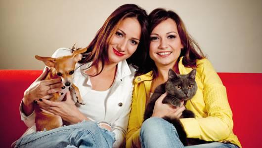 da li birate psa ili mačku petface