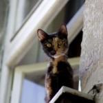 APEL SVIMA LJUBITELJIMA ŽIVOTINJA: Spasimo mačke zarobljene u stanu!