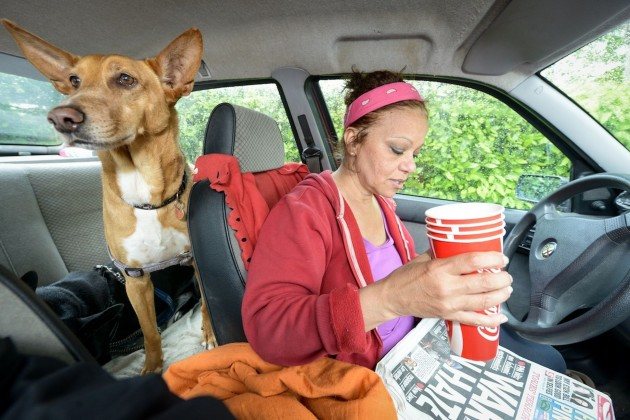 zivi u autu sa psima petface