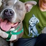 NE ODBACUJMO IH: Saveti za život sa slepim psom!