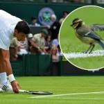 O, da Novak Đoković voli životinje: prekinuo meč kako bi spasio pticu! (FOTO)