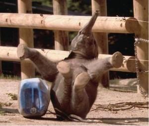 slon se raduje petface