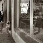 ULIČNI PSI: Fotografije koje prate tužnu svakodnevnicu napuštenih pasa
