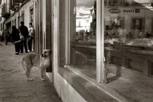 ulični psi petface