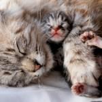 A šta jedu trudne mace?