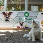 ODLIČNA AKCIJA: Udomi psa – osvoji besplatan tretman kod frizera!