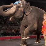 KONAČNO: Cirkusi se zabranjuju i u Nemačkoj!