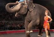 cirkusi zabrana petface