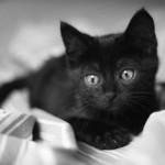10 razloga da udomite BAŠ crnu mačku! (VIDEO)