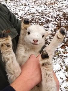 životinje reaguju petface