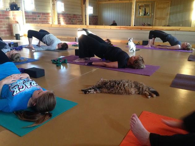 joga i napuštene mace petface