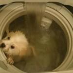 Ljubitelji životinja traže pravdu za psa, kojeg je vlasnik oprao u mašini za veš!