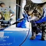 """Tara, mačka heroj, spasila dečaka pa dobila nagradu """"Pas heroj""""!"""