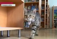 macka radi u knjizari petface