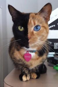 Mace koje su postale poznate zahvaljujući svojim šarama! (FOTO)