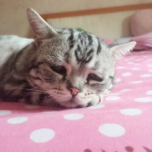 najtužnija mačka na svetu petface