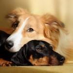 NOVI DOKAZI: Spasene životinje na život gledaju sa vedrije strane!