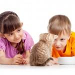 BESPLATNO I HITNO: Doniraš hranu za napuštene kuce i mace – osvojiš nagradu!