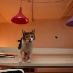 POMOZIMO IM: Maca, maskota beogradskog kulturnog centra GRAD, nestala!