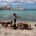 Dijana je sa svojim mužem krenula na odmor, a završili su spasavajući 34 napuštena psa! (FOTO)