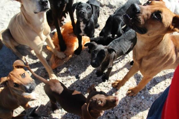 odmor sa napustenim psima petface