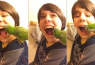 papagaj vadi zub petface