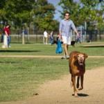 DOČEKALI: Nišlije dobijaju prvi park za pse!