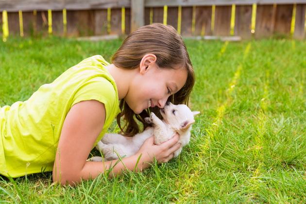 pas i gojaznost petface