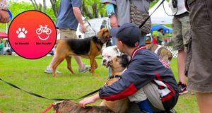 pet friendly festival petface