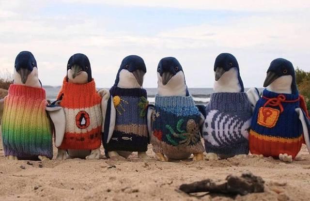 pingvini u odeci, pingvini