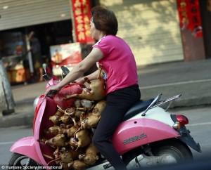 """Kina OPET u pripremama za """"festival mesa"""": Oko 10 hiljada pasa i mačaka zarobljeno!"""