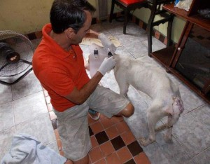 oporavak psa petface