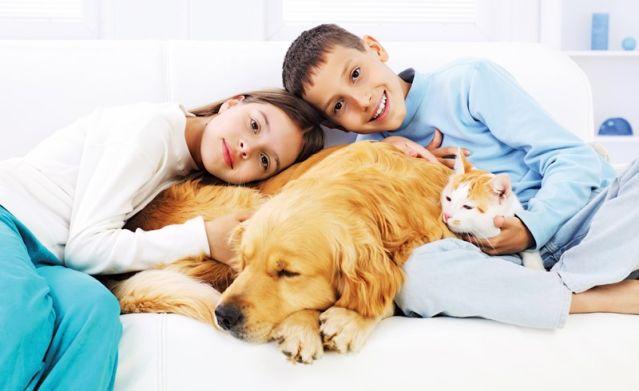 tri mačke i jedan pas u stanu petface