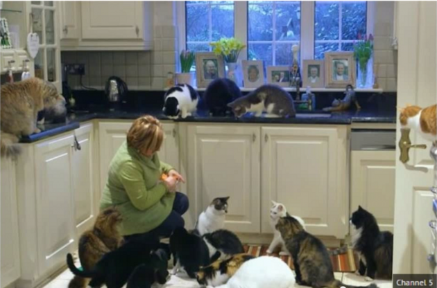 u kući živi sa 122 mačke petface