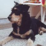SEĆANJE NA ĐOLETA: Psa koji je 2010. godine ubijen pred vlasnikom!