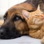 POBEDA: Stopiran zakon koji je omogućavao mučenje životinja!