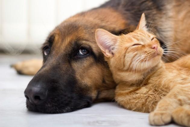 ulicni psi i macke petface